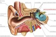 Zapalenie nerwu przedsionkowego. Jak odzyskać równowagę?